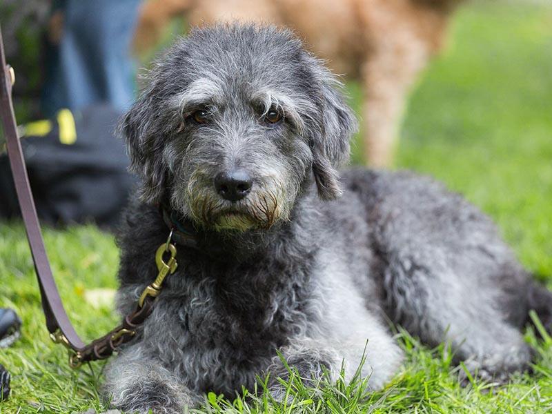 hundeschule-susanne-kohler-bühlerzell - ein hund an der leine liegt entspannt im gras