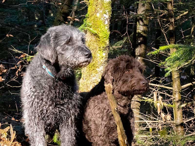hundeschule-susanne-kohler-bühlerzell - zwei hundefreunde sitzen nebeneinander am waldrand und schauen in die ferne