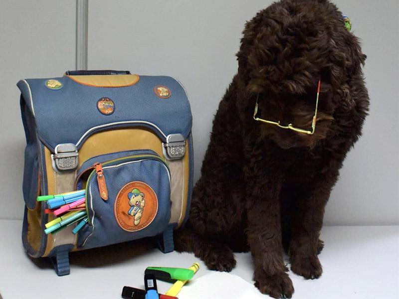 hundeschule-susanne-kohler-bühlerzell - ein hund sitzt neben einem schulranzen und trägt eine brille