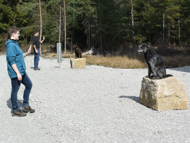 hundeschule-susanne-kohler-bühlerzell - zwei menschen stehen im wald mit ihren hunden, die auf großen steinblöcken sitzen