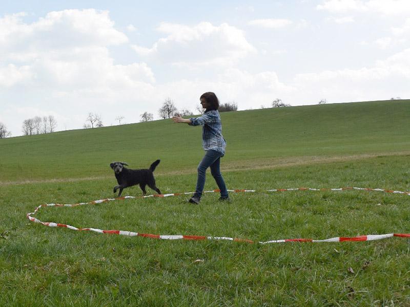 hundeschule-susanne-kohler-bühlerzell - susanne kohler übt mit ihrem hund auf einer wiese befehle in einem longierkreis