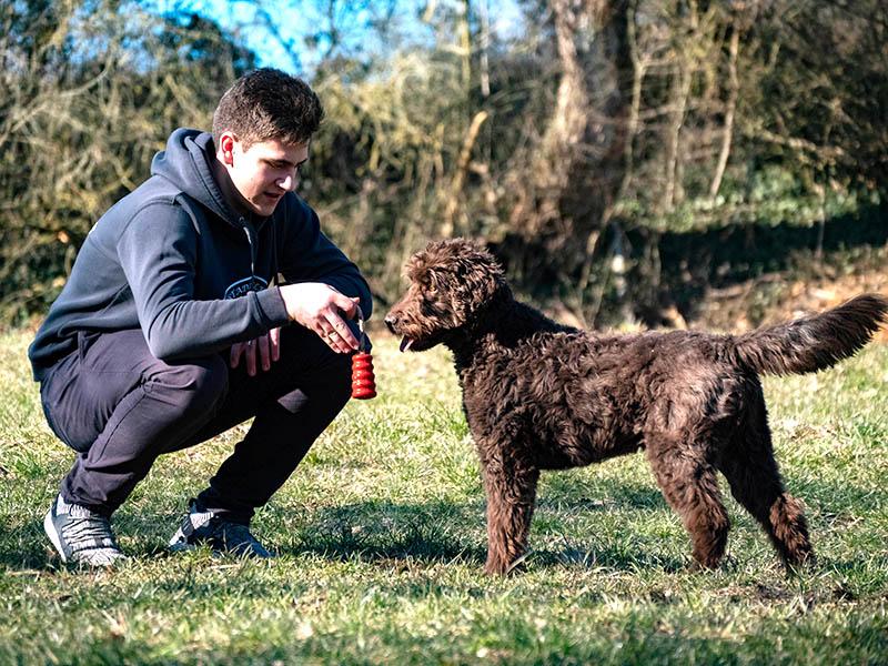 hundeschule-susanne-kohler-bühlerzell - ein junger mann sitzt in der hocke auf einer wiese und hält ein spielzeug für seinen hund in der hand